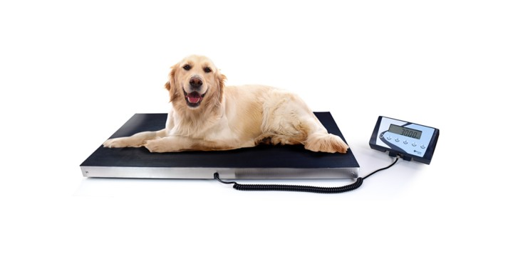 New veterinary scales